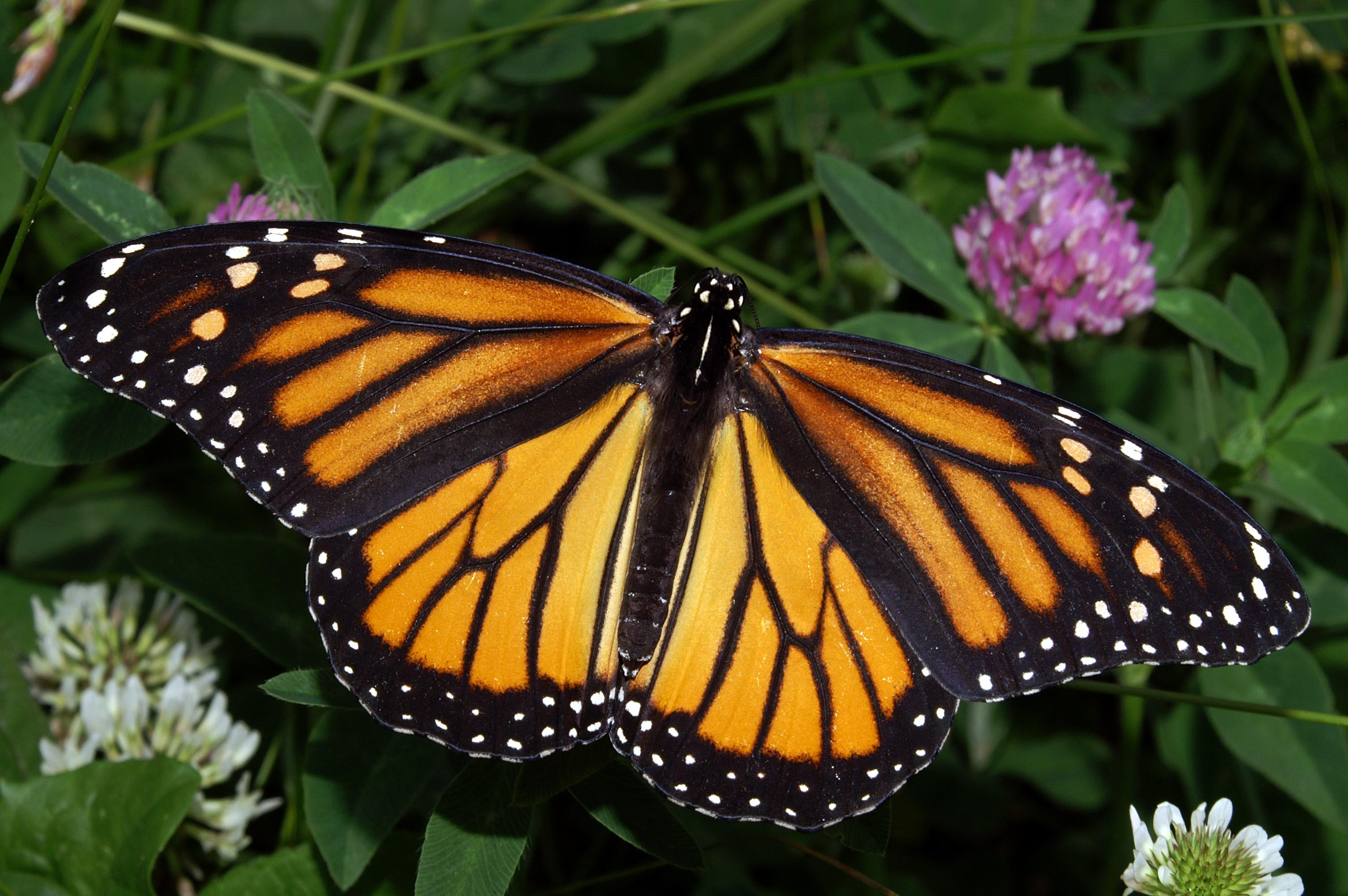 Consider Creating A Butterfly Garden To Save Them