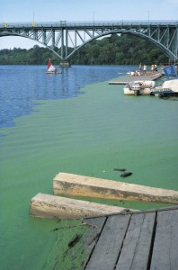 algae blooms fertilizer runoff